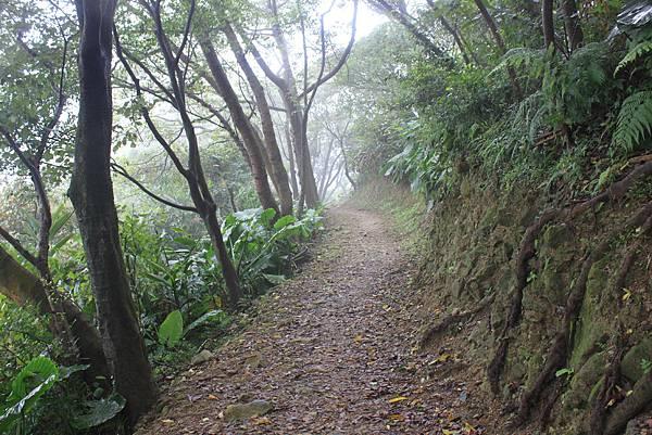 1124龜山福源山步道 (61)