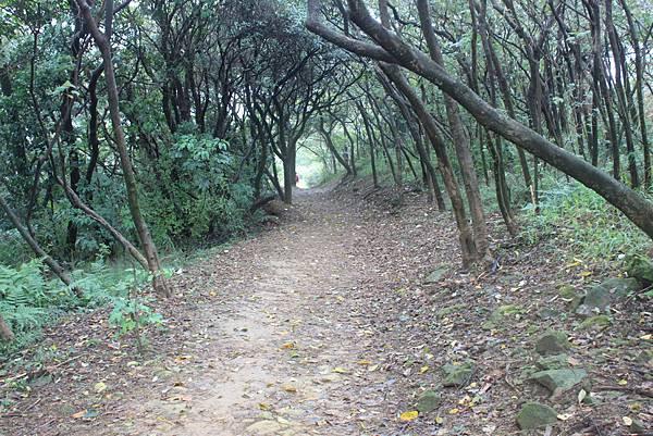 1124龜山福源山步道 (63)