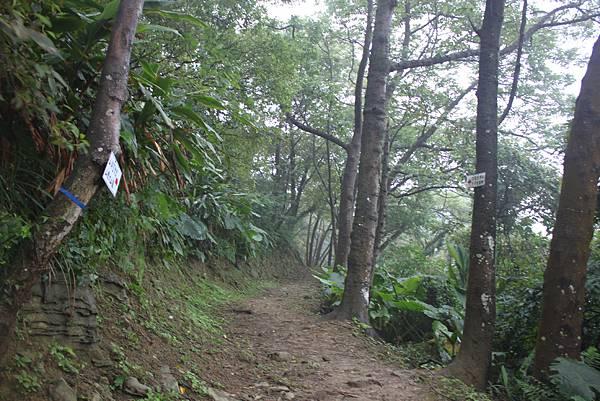 1124龜山福源山步道 (52)