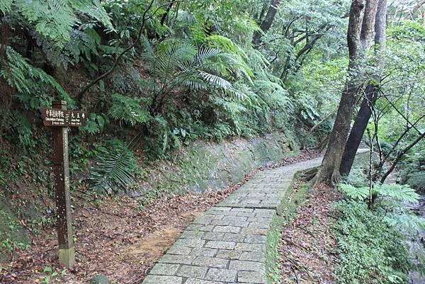 1201南港山縱走親山步道 (16)