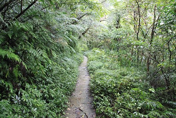 1223雨天的烏來紅河谷步道 (3)