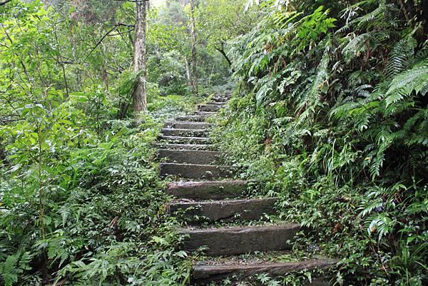 1223雨天的烏來紅河谷步道 (7)