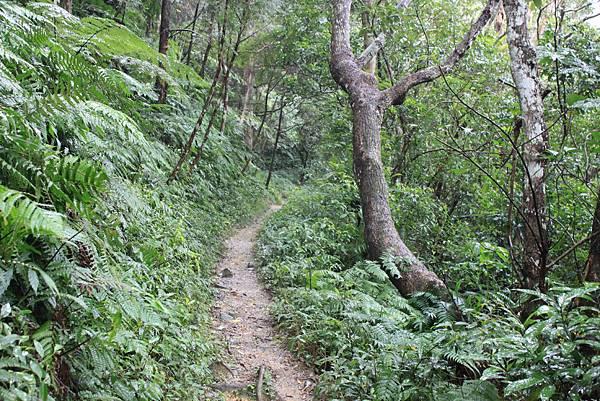 1223雨天的烏來紅河谷步道 (9)