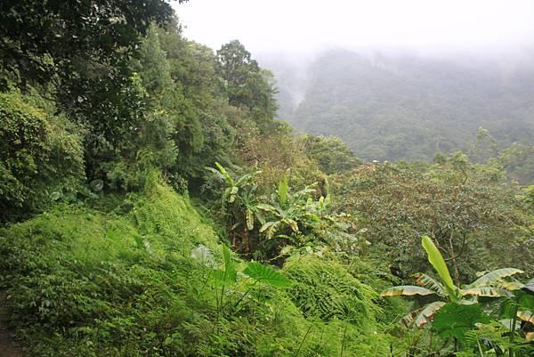 1223雨天的烏來紅河谷步道 (25)