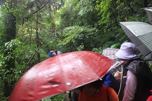 1223雨天的烏來紅河谷步道 (30)