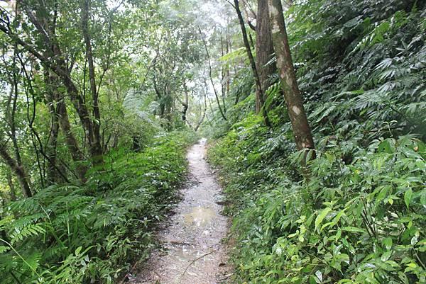 1223雨天的烏來紅河谷步道 (33)