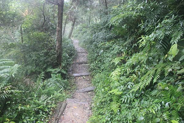 1223雨天的烏來紅河谷步道 (34)
