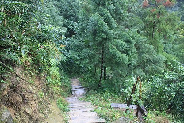 1223雨天的烏來紅河谷步道 (35)