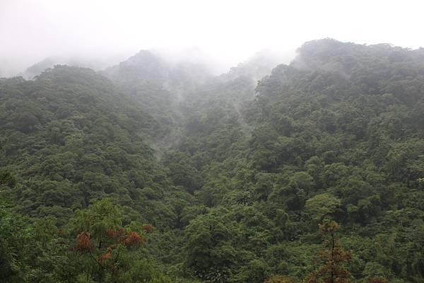 1223雨天的烏來紅河谷步道 (36)