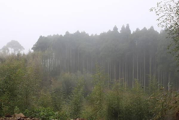0112新竹關西馬武督山 (49)