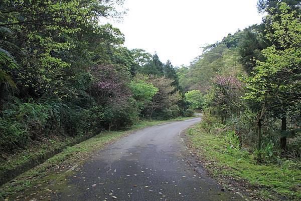 平溪內平林山及平湖森林遊樂區騎單車 (37)