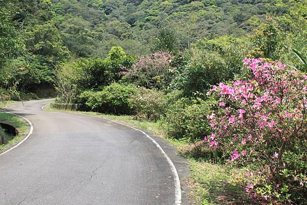 平溪內平林山及平湖森林遊樂區騎單車 (51)