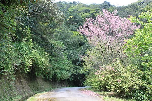 平溪內平林山及平湖森林遊樂區騎單車 (52)