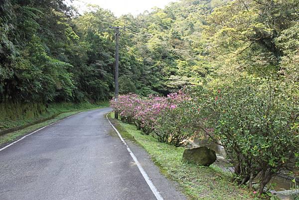 平溪內平林山及平湖森林遊樂區騎單車 (55)