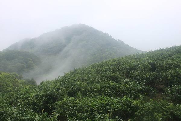 0331銀河洞越嶺至待老坑山 (30)