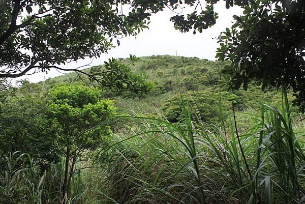 0525宜蘭礁溪鵲子山 (37)