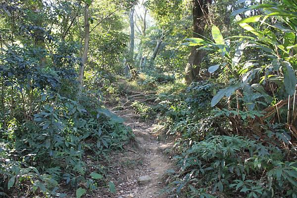 1123溪州山登山步道 (8).JPG