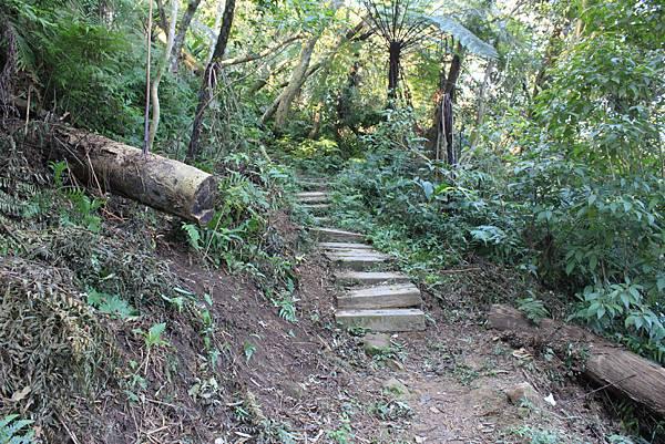 1123溪州山登山步道 (14).JPG