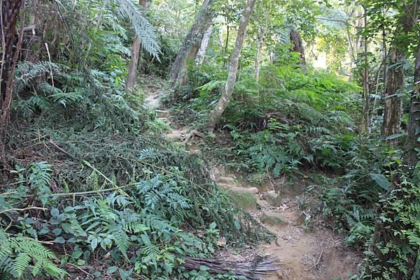1123溪州山登山步道 (15).JPG