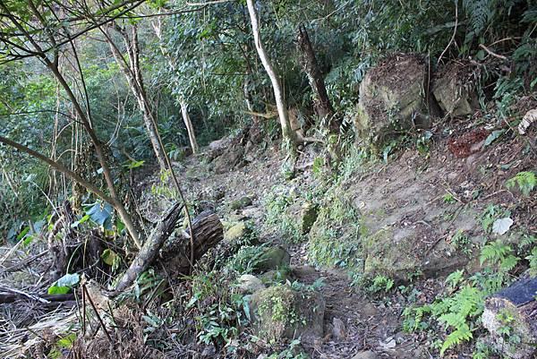 1123溪州山登山步道 (18).JPG
