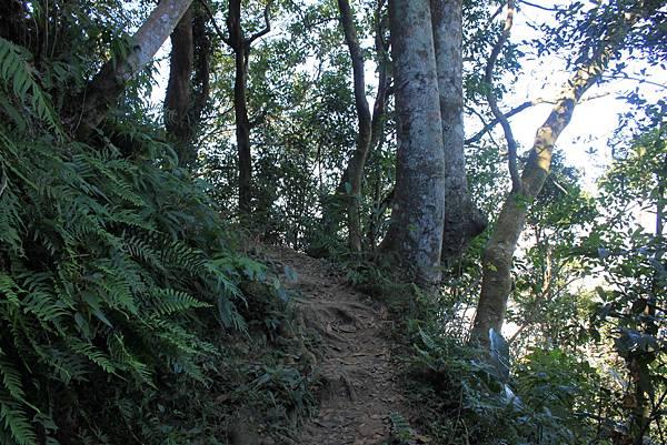 1123溪州山登山步道 (22).JPG