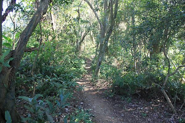 1123溪州山登山步道 (26).JPG