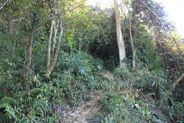 1123溪州山登山步道 (29).JPG