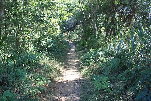 1123溪州山登山步道 (35).JPG