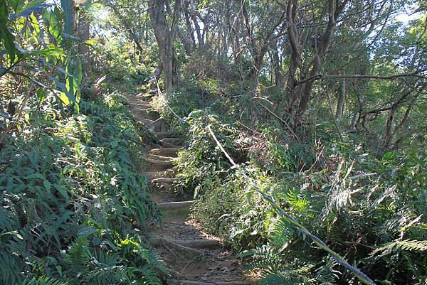 1123溪州山登山步道 (45).JPG