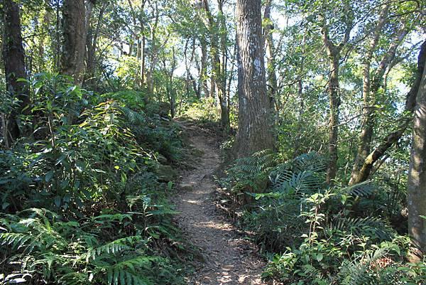 1123溪州山登山步道 (48).JPG