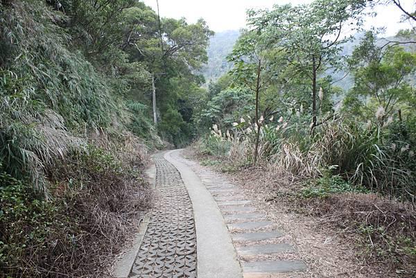 1227新竹新埔鎮九芎湖九湖步道 (22).JPG