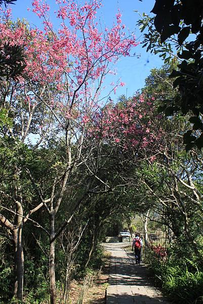 0203觀音山硬漢嶺 (17).JPG