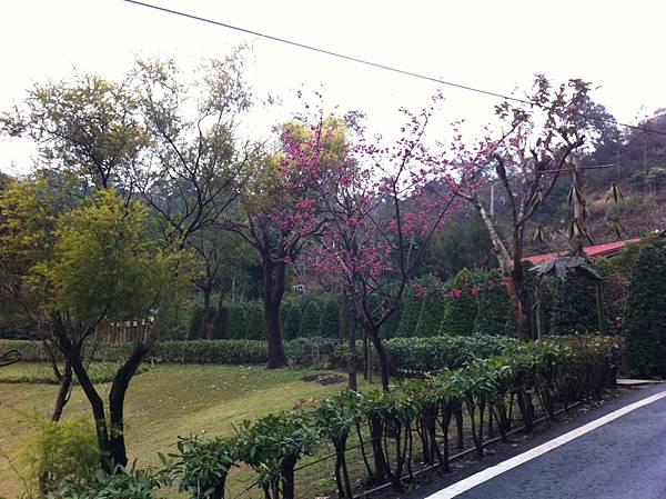 0208九芎湖步道 (22).JPG