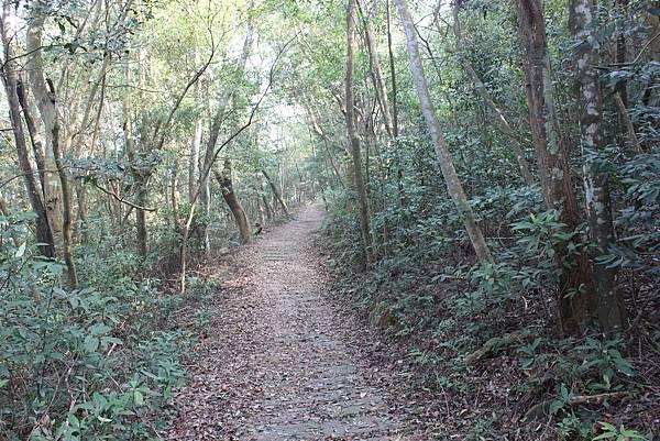 0228三義三角山 (9).JPG