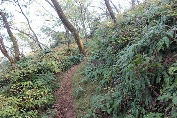 0228三義三角山 (18).JPG