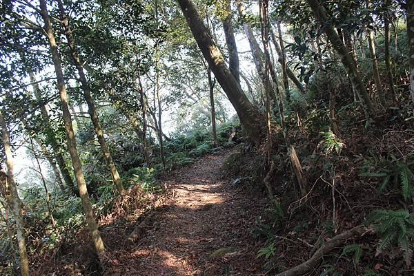 0228三義三角山 (19).JPG