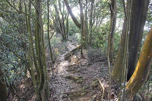 0228三義三角山 (23).JPG
