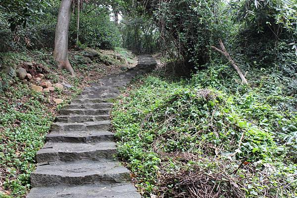 0316忠義山、小坪頂 (12).JPG