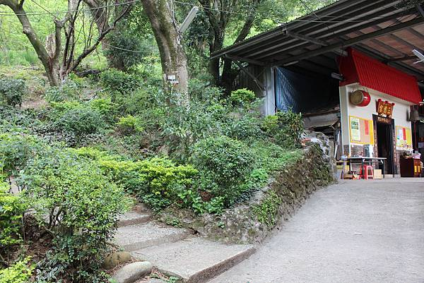 0316忠義山、小坪頂 (39).JPG