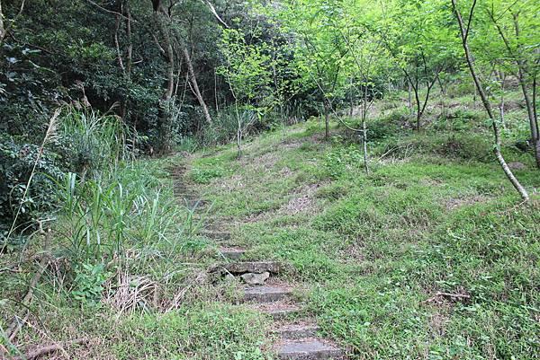 0316忠義山、小坪頂 (40).JPG