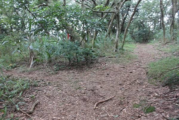 0316忠義山、小坪頂 (44).JPG