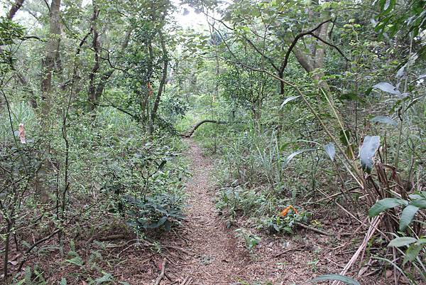 0316忠義山、小坪頂 (45).JPG