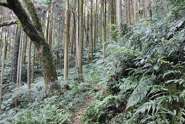 0322金平山、小烏來 (9).JPG