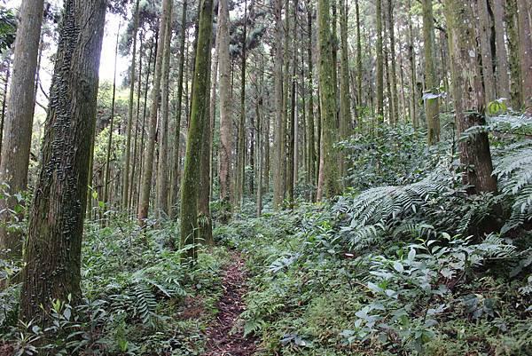 0322金平山、小烏來 (10).JPG