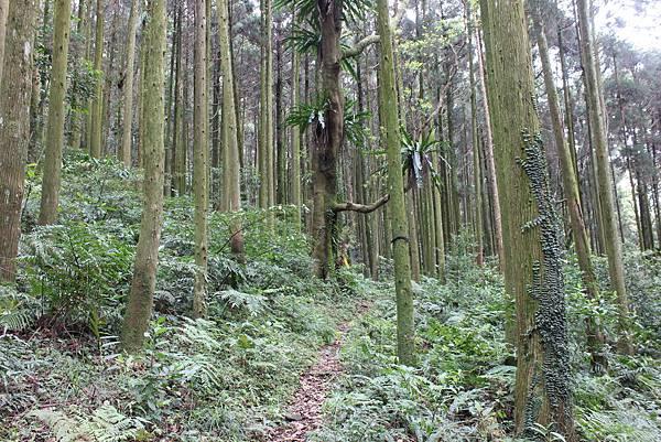0322金平山、小烏來 (13).JPG