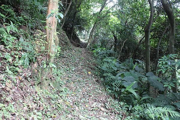 IMG_0518三峽麒麟山 (20).JPG