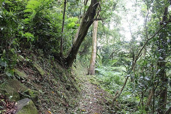 IMG_0518三峽麒麟山 (26).JPG