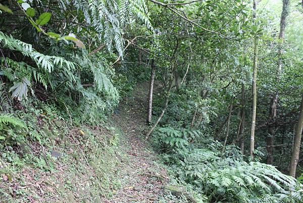 IMG_0518三峽麒麟山 (27).JPG