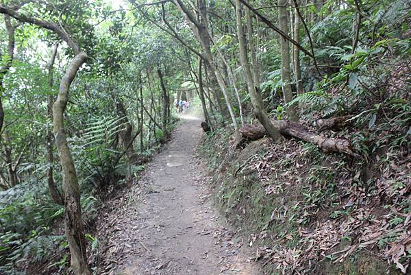 0525獅頭山翠山步道碧溪步道及大崙尾山 (15).JPG