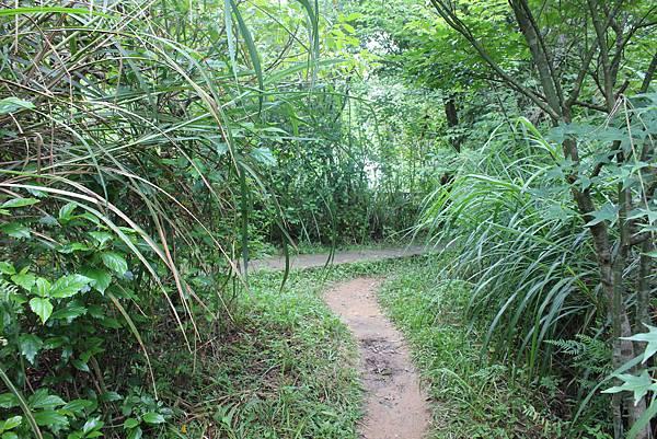 0525獅頭山翠山步道碧溪步道及大崙尾山 (28).JPG